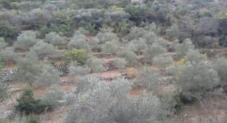 Land for Sale Kfar Hay Batroun Area 2000Sqm