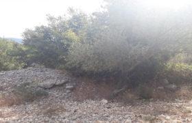 Land for Sale Ain Kfaa Jbeil Area 2007Sqm