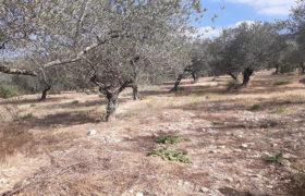 Land for Sale Ain Kfaa Jbeil Area 1331Sqm