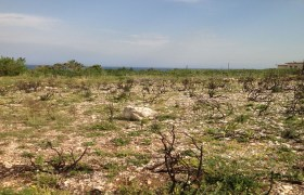 Land for Sale Berbara Jbeil Area 1654Sqm