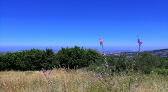 Land for Sale Chabtine Batroun Area 1955Sqm