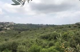 Land for Sale Monsef Jbeil Area 1363Sqm