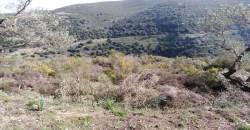 Land for Sale Bejdarfil Batroun Area 7019Sqm