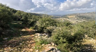 Land for Sale Aassia Batroun Area 13178Sqm
