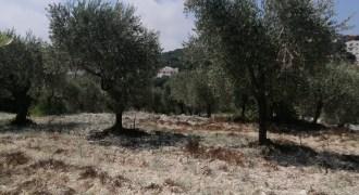 Land for Sale Bejdarfil Batroun Area 1370Sqm