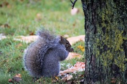 Squirrel with pizza5