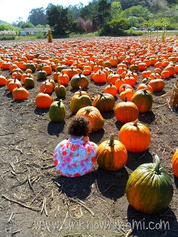 large pumpkin patch