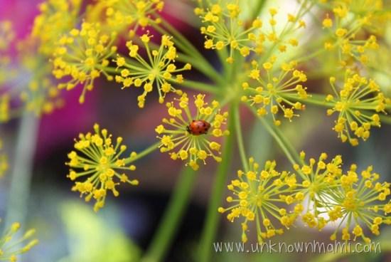 Ladybug-unknownmami
