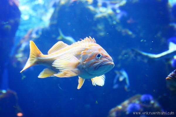 Fish_at_California_Academy_of_Arts-unknownmami
