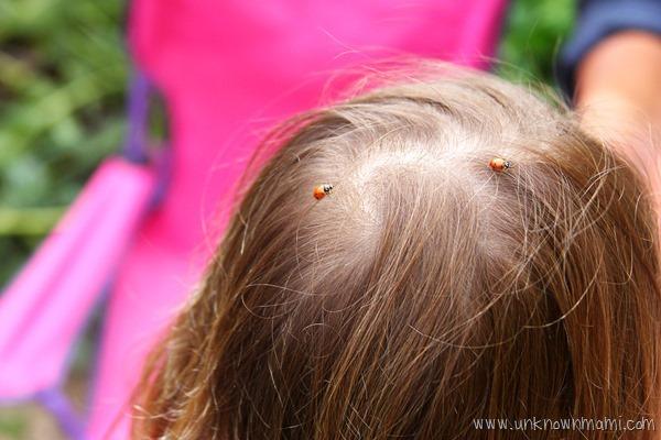 Ladybugs in hair