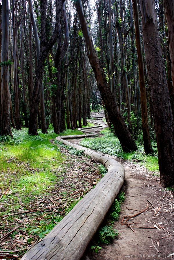 Wood Line installation in the Presidio