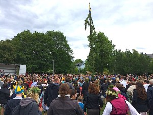 A large crowed of Midsummer Eve revelers cheer on the raising of the May Pole on Vaxholm, Sweden. By C.S. White