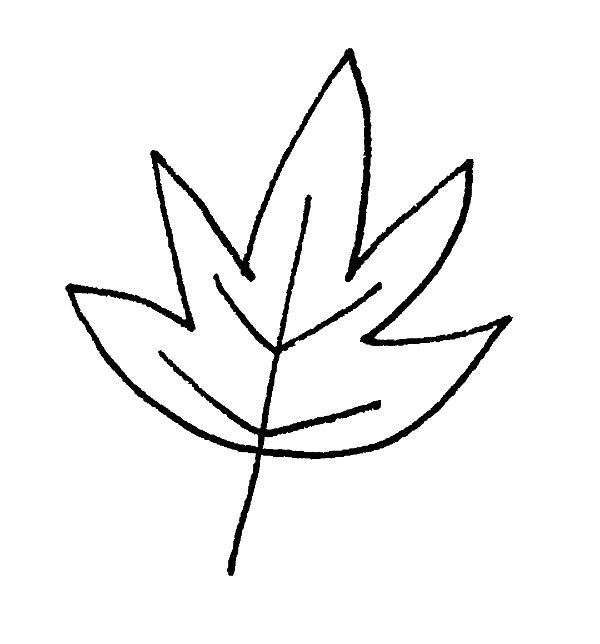 Drawing a Leaf