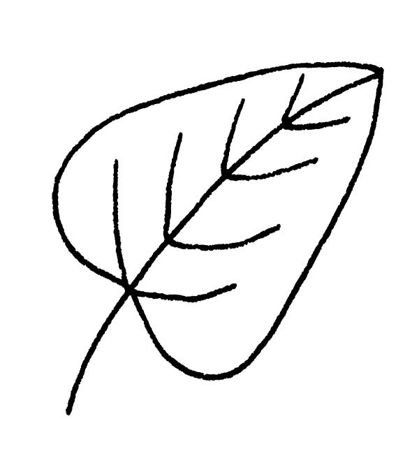 Drawing Leaves