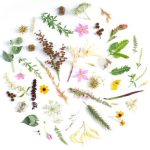 flowers arranged in a circle