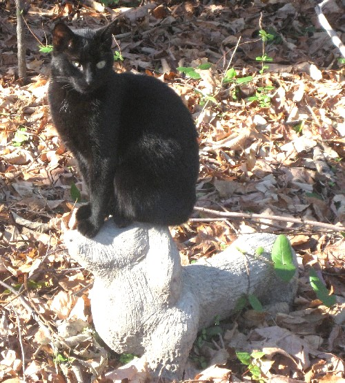 Q-Kitty on top of statue for Uncle