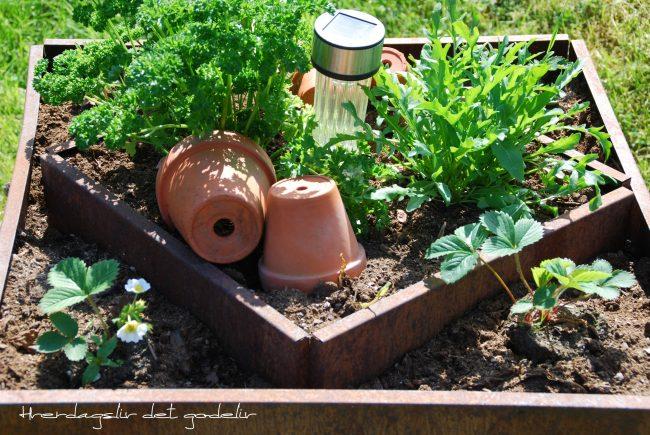 Min spiselige hage - lag din egen kjøkkenhage - høybed i kjøkkenhagen