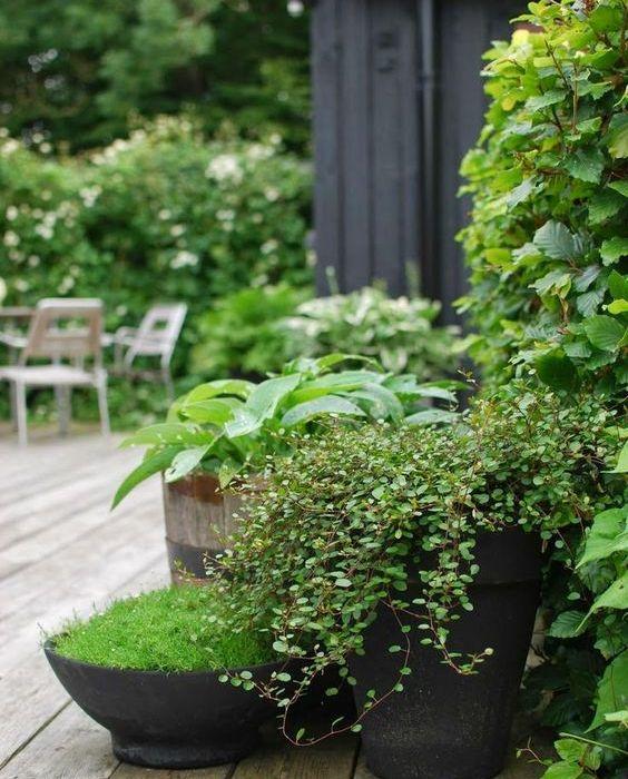 Krukker i hagen, fylt med blomstrende og grønne vekster