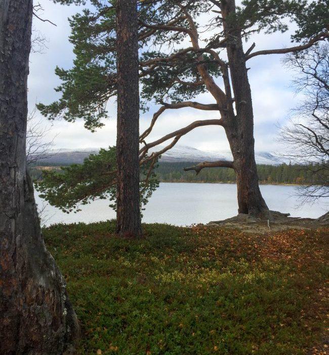 Vålådalen – Sverige – Åre