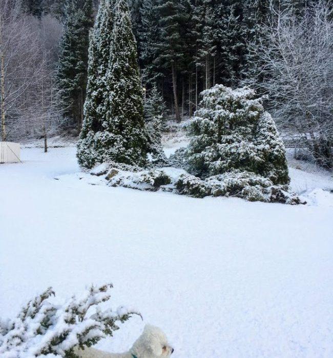 Hagen i januar