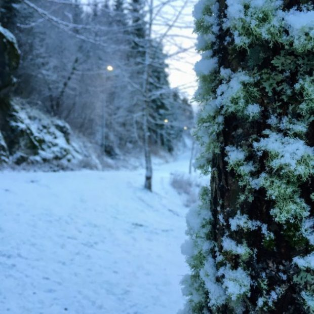 Hagen i januar - bye9design