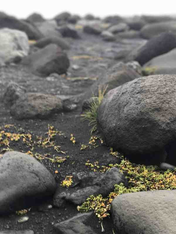 Iceland Rock - Reyn Photography Collection by Laurel Christine