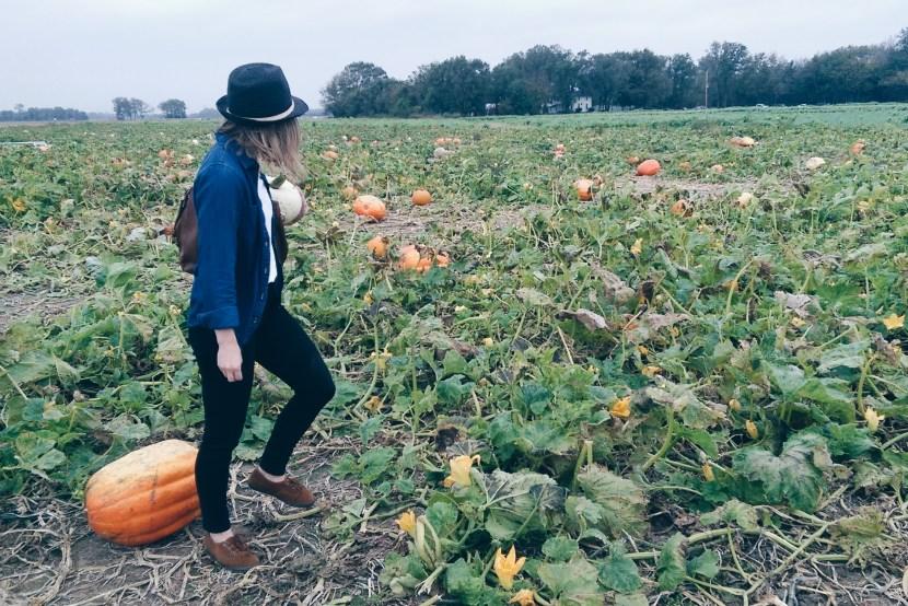 By Manna Picking Pumpkins
