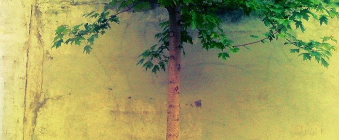 City Saplings, Urban Ancients