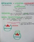 budowa enzymu