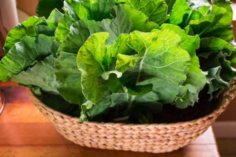 collard greens in basket