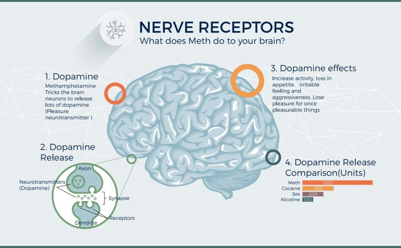 "A section of an infographic with the heading ""What does crystal meth do to your brain?"""