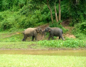 These elephants got into a fight that included some running across the river