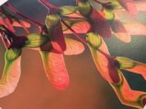 Maple Seeds Canvas triple Coated