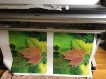 Maple Leaves Printing