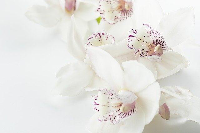 Arti MImpi Melihat Bunga Anggrek Pertanda Buruk