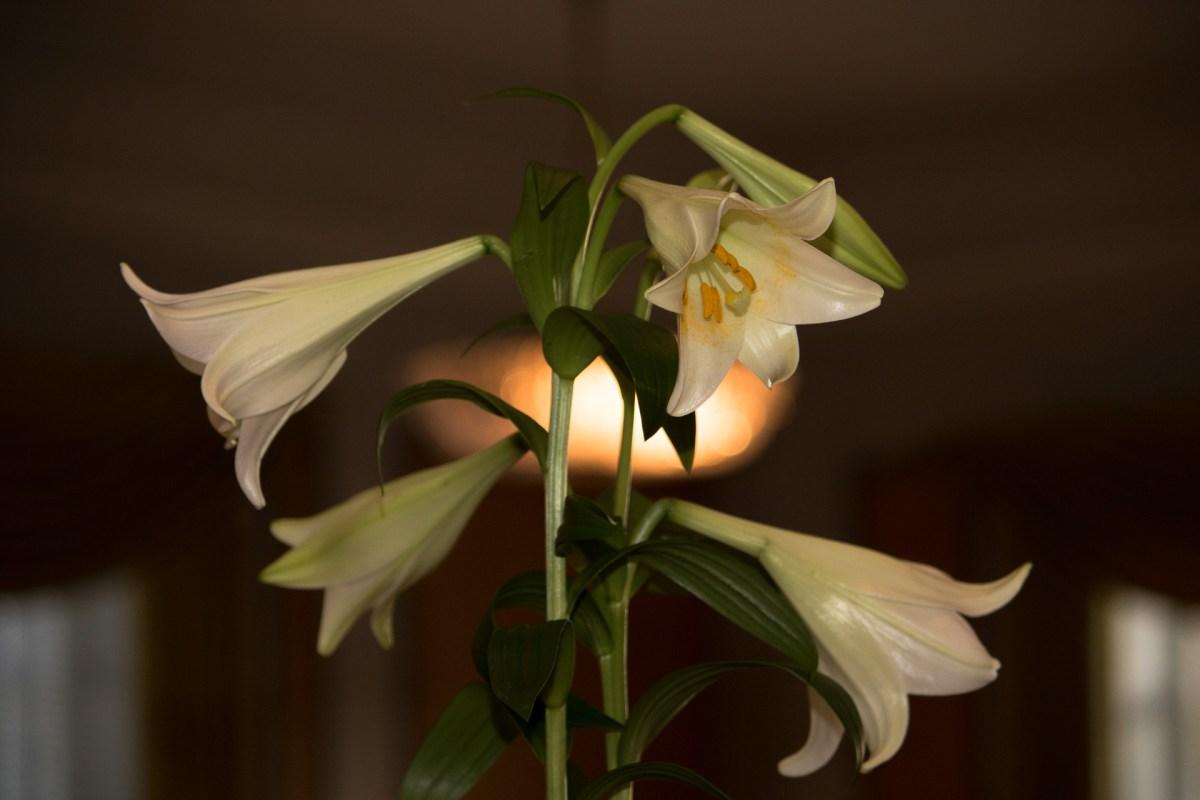 Maria og Kristians bryllup - blomsterdekoration