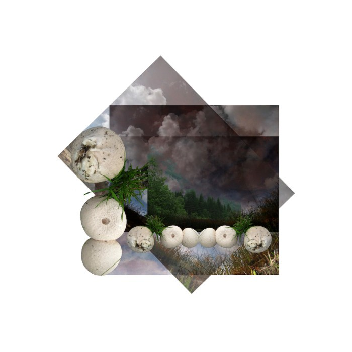 Fotografisk hukommelse - svampe