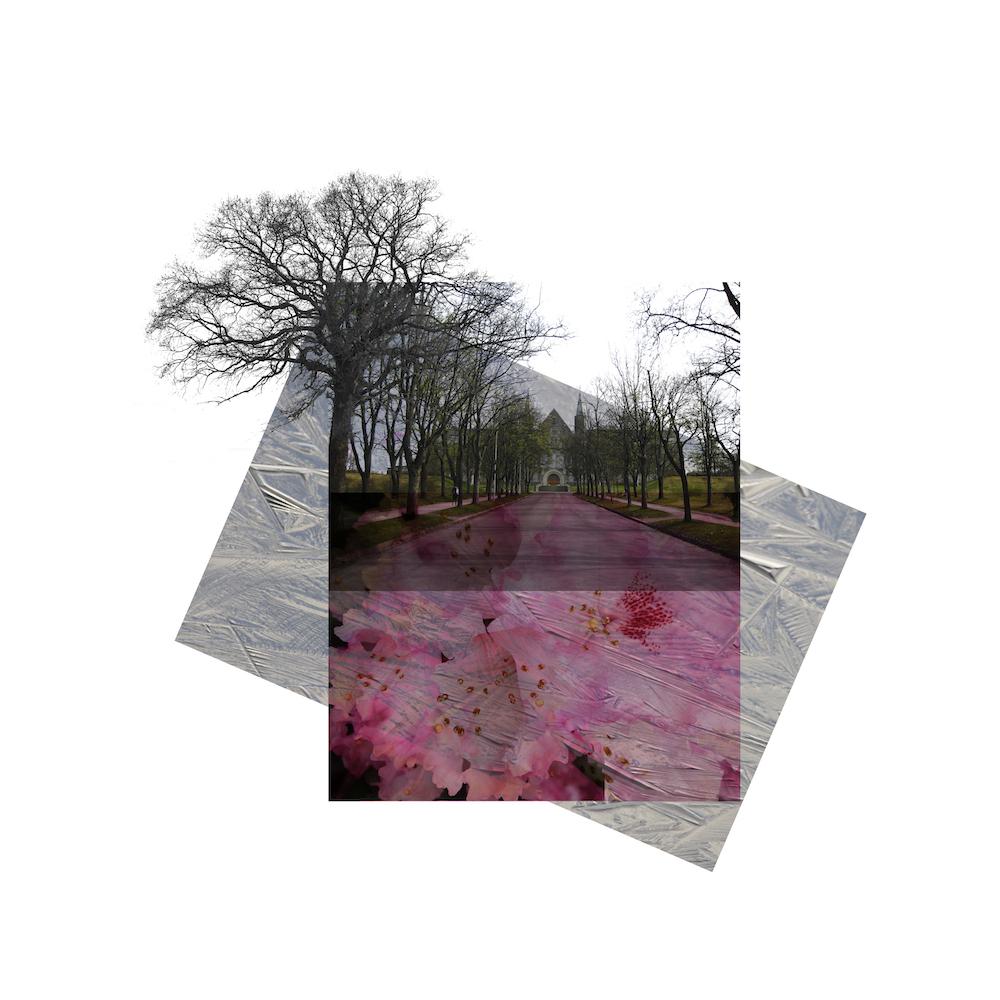 Fotografisk hukommelse - is og blomster