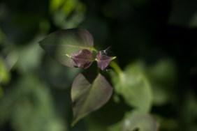 Sommer-blomster-BySunroad-web-1