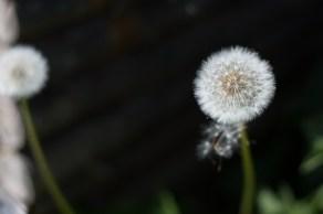 Sommer-blomster-BySunroad-web-8