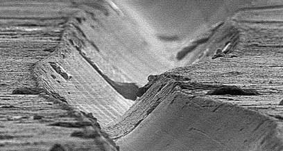 Surco del disco en microscopio