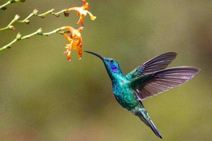 Review: Hummingbird Salamander by Jeff Vandermeer