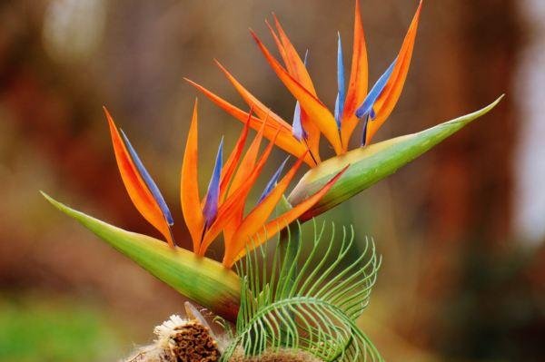 Самые красивые цветы в мире (фото с названиями)