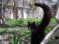 Առավոտները տնից դուրս գալիս պարտադիր բարևում եմ բակի կատուներին