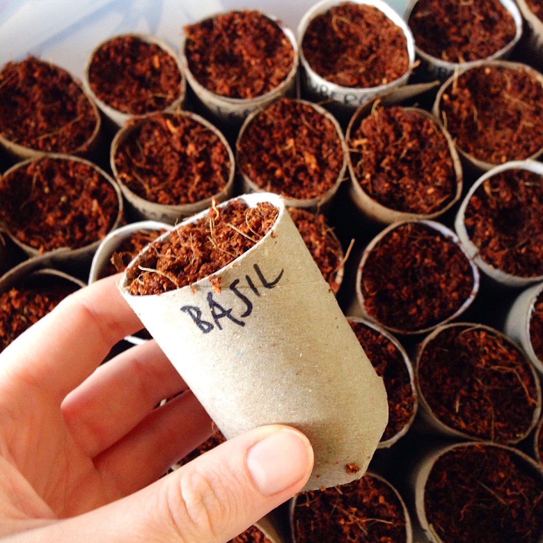 DIY - Biodegradable toilet roll planters