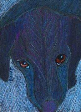 Black Puppy Dog Eyes