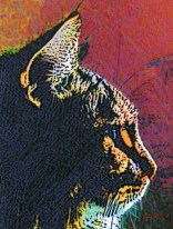 Maine Coon Cat Art