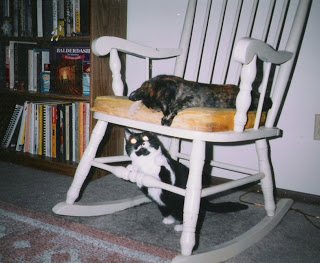 Two cats in rocking chair