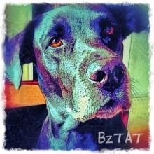 Black Labrador Retriever Dog Digital Pet Portrait