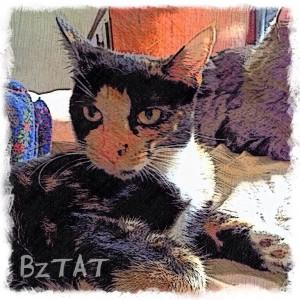 Digital Pet Portrait of Mia Meow